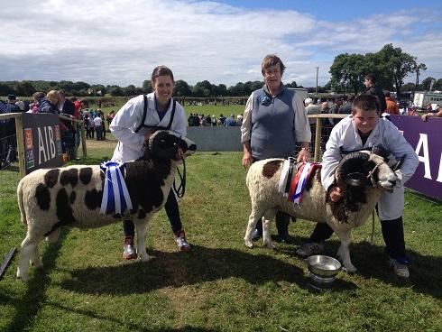 Ireland News Archive – The Jacob Sheep Society