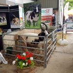 Jacob Sheep Society Stand at Sheep 18 at Malvern today.
