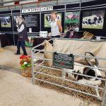 Jacob Sheep Society Stand at Sheep 18 at Malvern today.
