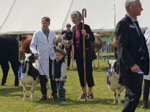 Breed champion and reserve interbreed champion shutecombe shearling ewe